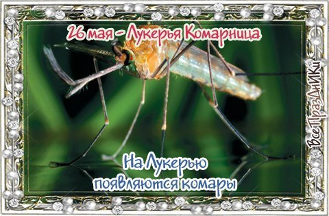 26-maya lukerya-komarnitsa